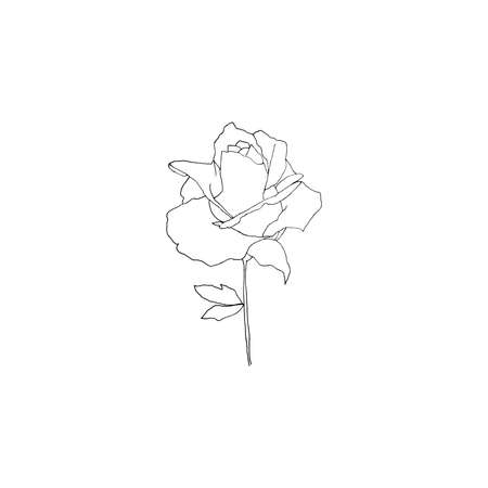 Simple and clean hand drawn floral. Sketch style botanical illustration. Great for invitation, greeting card, packages, wrapping, etc.