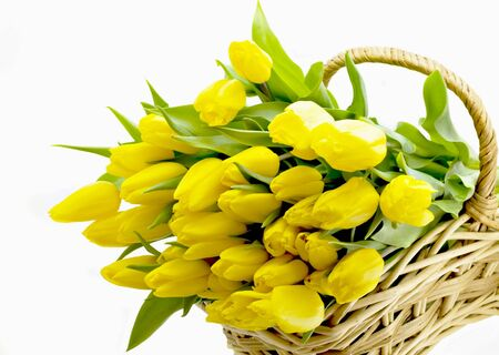 Armful of yellow tulips lies in basket photo