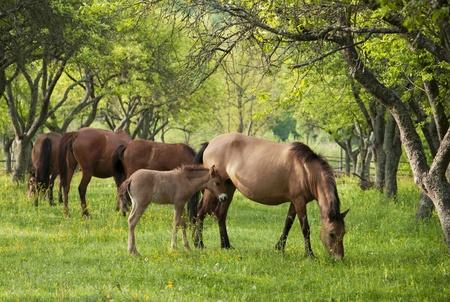 Jonge horsy Stockfoto