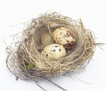 sparrow: birds nest