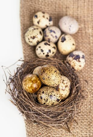 quail eggs in nest photo