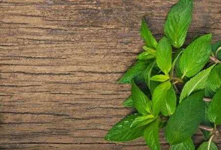 Closeup of fresh mint