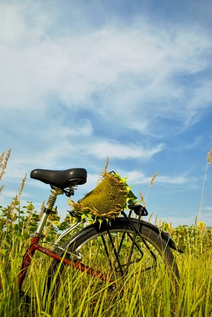 biei: Sunflower and bicycle Stock Photo