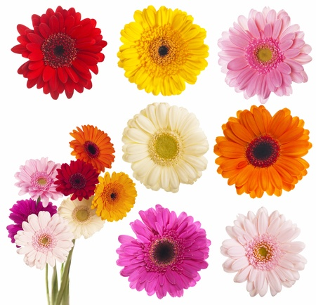 Flower of gerber daisy collection Imagens