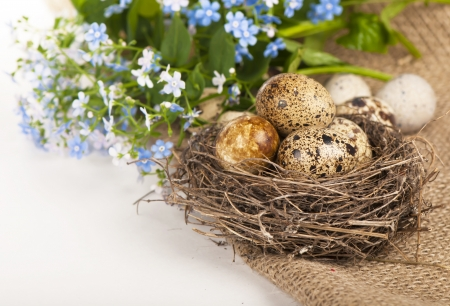quail eggs and spring flowers photo