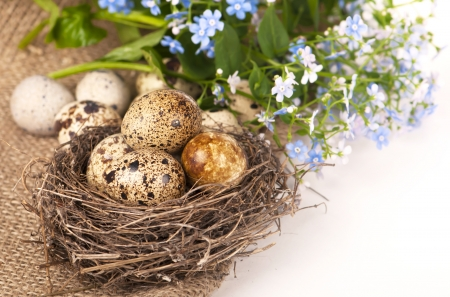 Nest with eggs and forget-me-nots on a cloth photo