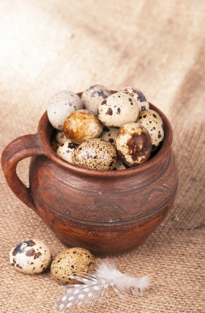 Quail eggs in a jug, a feather on a canvas photo