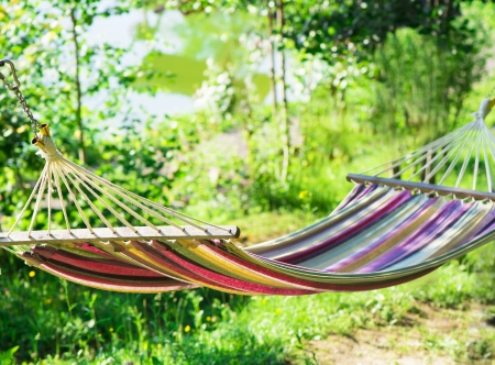 hammock in a garden photo