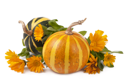 group of pumpkins of different shapes and sizes surrounded by leaves on the white photo