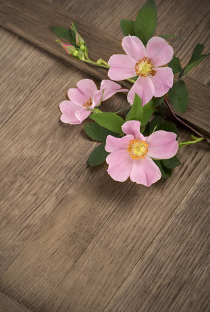 dogrose flowers on a wooden board photo