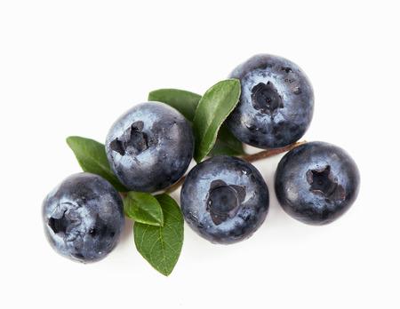bilberry: Mature bilberry