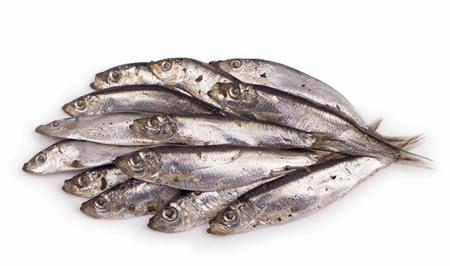 pond smelt: Salty fish sprat isolated on white background Stock Photo