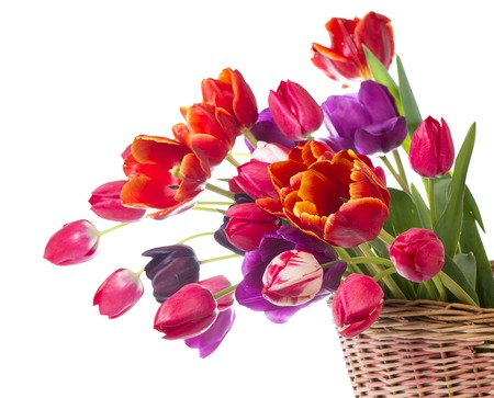 valentines day mother s: Spring color tulips in a bouquet with pink, red beautiful flowers isolated on white
