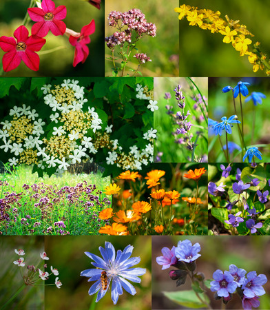 colorful carpeting of wildflowers