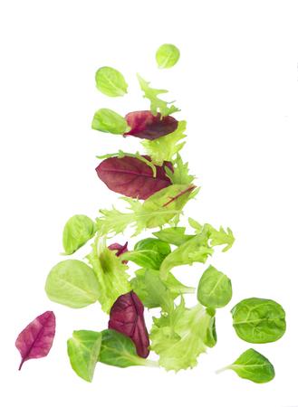 Fresh green leaves lettuce salad isolated on white background Stock Photo