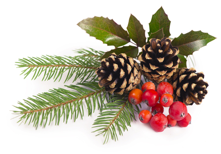 The branches of holly, pine cones, mountain ash berries