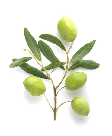 Olive fruit and olive leaves on a white background