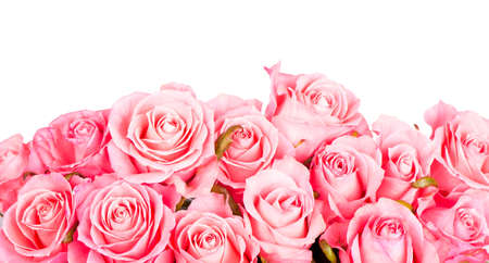 Pink roses isolated on white background 写真素材