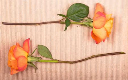 Orange rose on a brown paper background