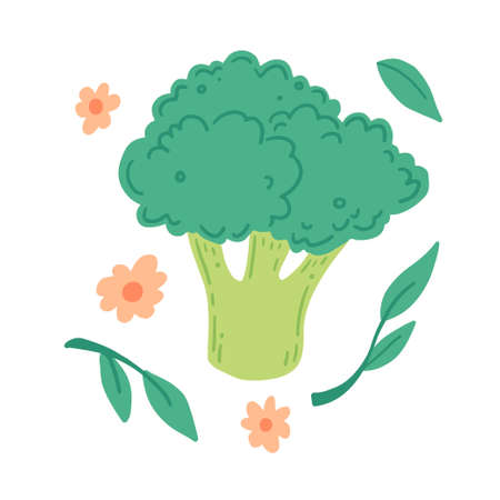 Broccoli illustration isolated. Concept of healthy food, vegetable. Broccoli have abstract, cartoon, hand drawn style.