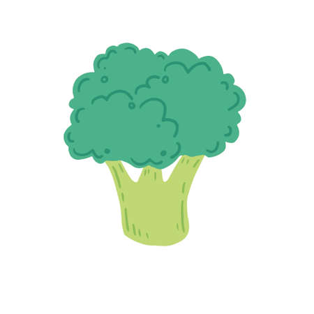 Broccoli vector illustration isolated. Concept of healthy food, vegetable. Broccoli have abstract, cartoon, hand drawn style.