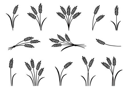 Wheat, barley, rice icon. Hand drawn sketch style oat with grain. Wheat isolated vector illustration.