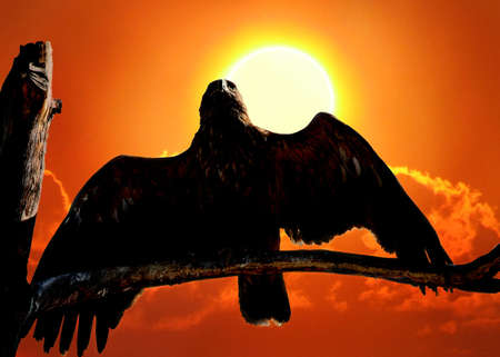 Eagle on  branch against the big solar disk photo