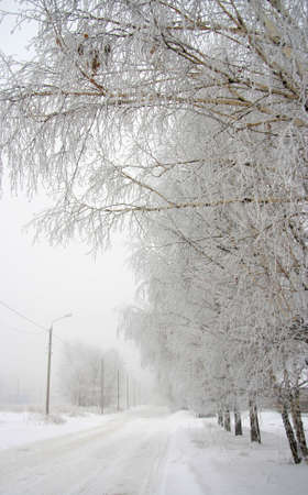 Winter city landscape with street and trees covered by a snow.