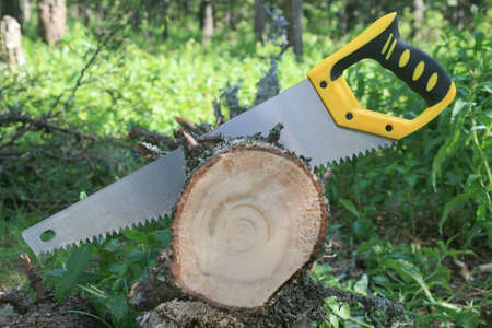 sawing: Metal saw with handle sawing  tree trunk