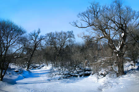 coldly: Beautiful winter landscape with the frozen river and trees Stock Photo