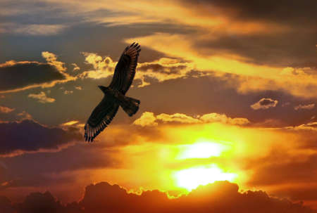 sunset clouds: Flying proud eagle in  sunset the sky Stock Photo