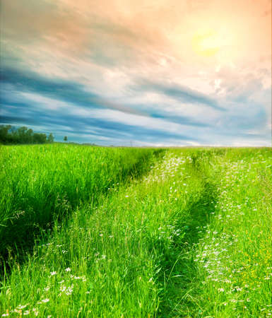 Beautiful bright landscape with  sky and  field Stock Photo - 12878711