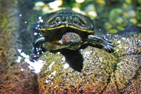 moistness: Turtle on stones near water ashore