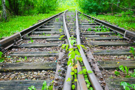 wood railroad: old railway which has grown with plants