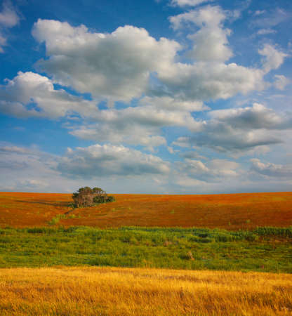 Morning landscape with  field tree and clouds Stock Photo - 15495040
