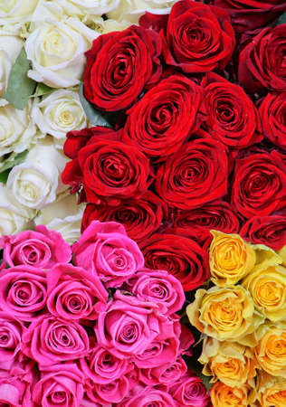 roses bouquets of red yellow white pink color photo