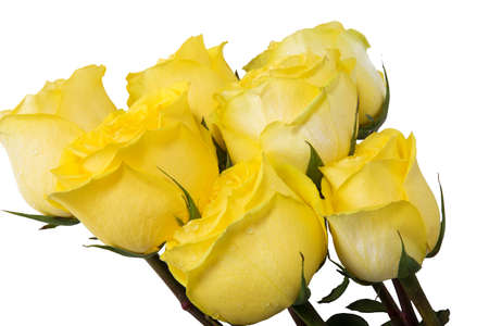 yellow roses: yellow roses bouquet isolated on white