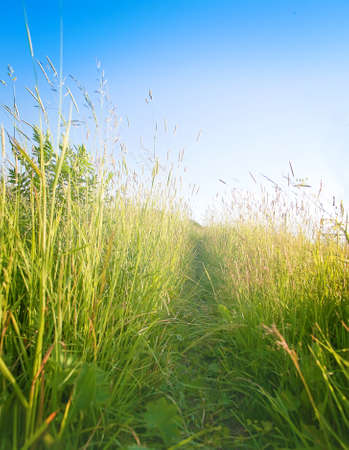 shined: green meadow with high grass shined with sun Stock Photo