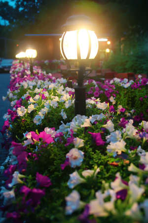light lamps in lawn with bushes of flowers at night Standard-Bild