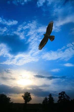 曇り空でフィールド上を飛んでイーグル 写真素材