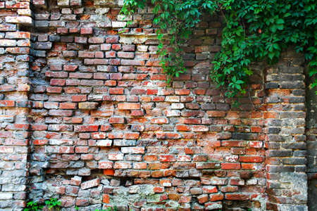 flatten: old brick wall overgrown we flatten