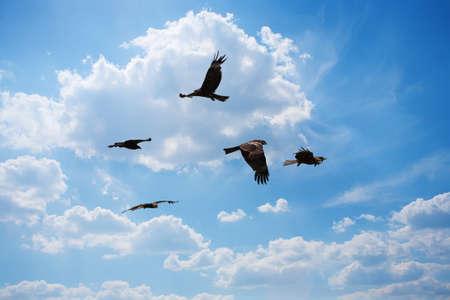 eagles flying in sky in sun beams photo