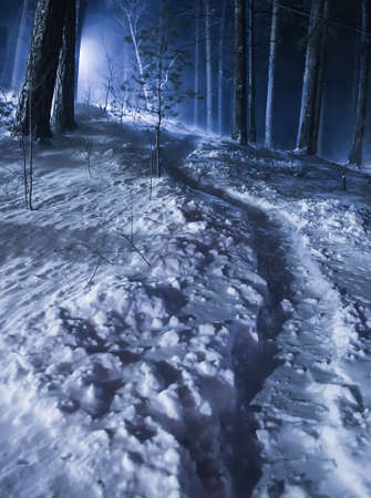 night winter forest with footpath in snow
