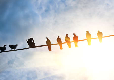 pigeons on wire against solar sky