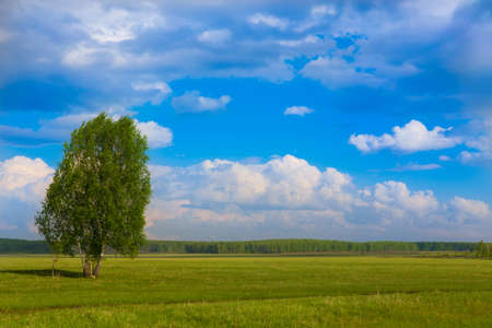 summer landscape with tree field the sky and the wood