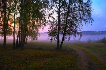 woodland  horror: evening fog on edge of wood in summer