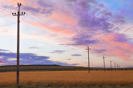 outdoor electricity: power line in a wheat field at sunset