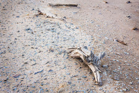 ecological disaster: ecological disaster in desert died-out vegetation