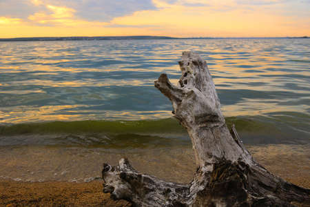 snag: coastline of  lake with snag against background of sunset
