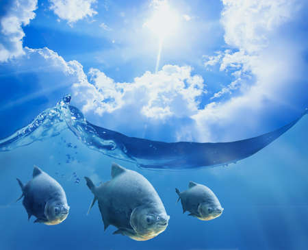 Fish under the sea surface on it a beautiful sunny sky with clouds